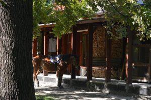 Margaret Island Budapest Pet Zoo Pony