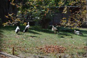 Margaret Island Budapest Storks
